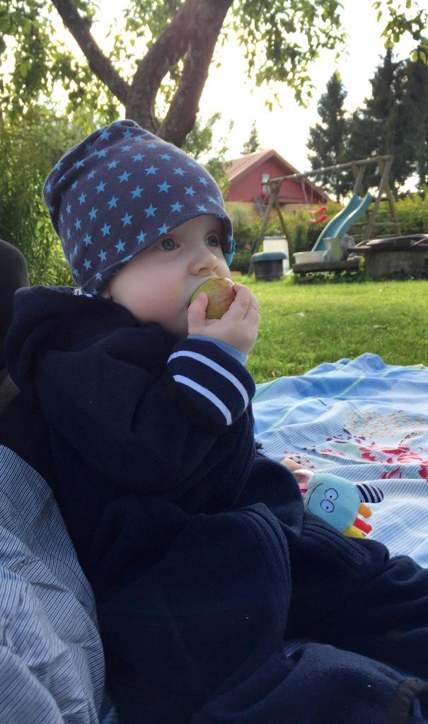 JJ esimene sügis toob endaga ka esimesed õunad :)